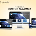 Professional wordpress development
